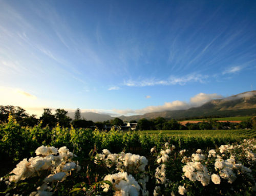 Private Hermanus Winelands Day Tour